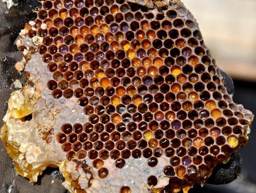 mehiläishoidon peruskurssi